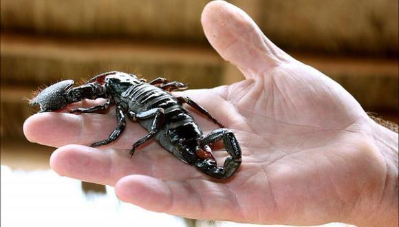 ¿Cómo desarrolló el escorpión su picadura mortal?