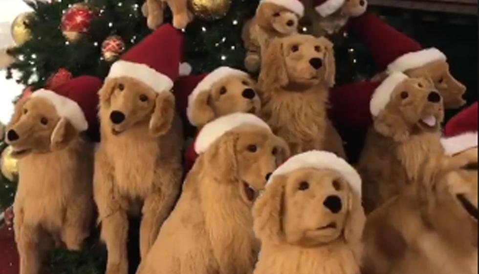 Uno de estos perros es el verdadero y real. ¿Puedes encontrarlo en menos de dos segundos? | Facebook