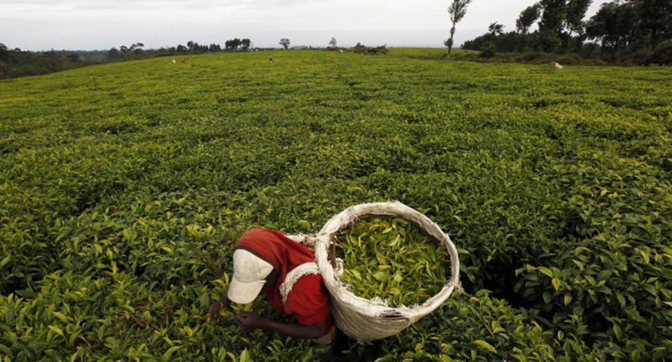 Síndrome de Down: mejoran conexiones cerebrales con té verde