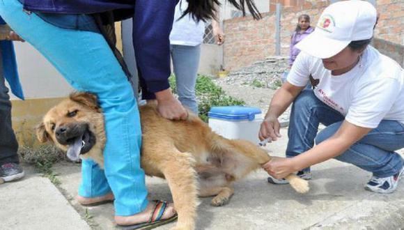 En Moquegua vacunaron a más de 14.500 perros contra la rabia