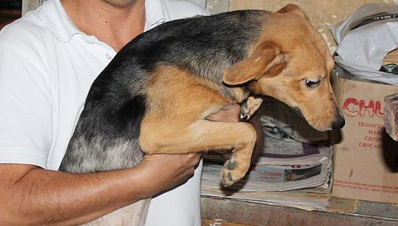 ¿Quieres adoptar alguno de los perros rescatados en Barranco?