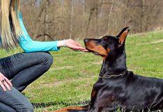Mujer fue lamida por su perro y una bacteria hizo que perdiera las manos y piernas