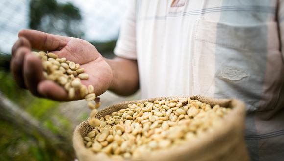 Un productor enseña sus granos de café tostado en Villa Rica, distrito del departamento de Pasco. El 90% de la población allí se dedica al cultivo del café y a otras actividades relacionadas con el producto, incluido el turismo.