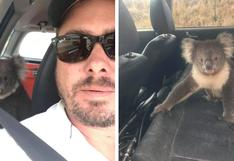 Koala es encontrado refrescándose en auto con aire acondicionado y genera controversia entre usuarios