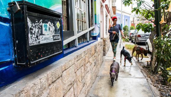 Los paseos son fundamentales para mantener una manada sana y equilibrada, pero en estos días debemos de hacrlo de manera responsable. (Foto: Andrea Carrión)