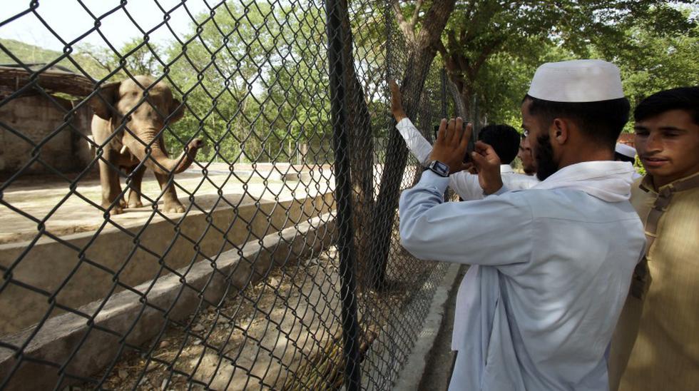 Kaavan, el elefante maltratado que tiene la atención mundial - 1