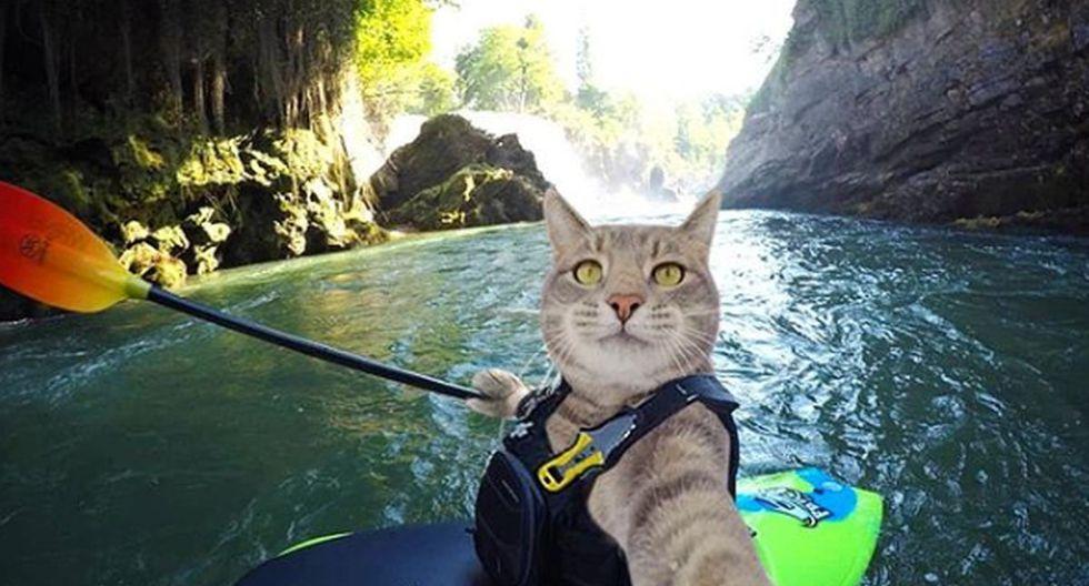 El gato Manny se toma fotos en diferentes situaciones, ya sea en su casa, en el parque, en la piscina o haciendo canotaje. Es un todoterreno | Foto: yoremahm / Instagram
