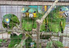 Ucayali: rescatan a 1.500 aves silvestres de traficantes de animales