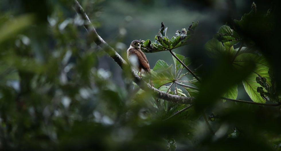 Perú Natural: un recorrido por Pampa Hermosa - 2