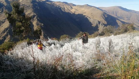 Áncash: Dieciocho heladas en lo que va del año han afectado a más de 140 hectáreas de cultivos (Foto: COER Áncash)