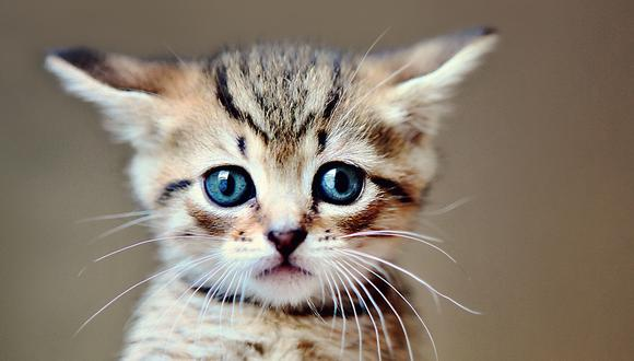 Radar felino: no le cortes los bigotes a tu gato