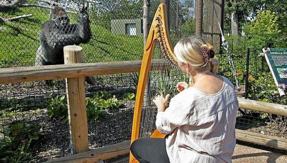 Terri Tacheny ha pasado casi una década tocando música para animales. (Foto: AP)