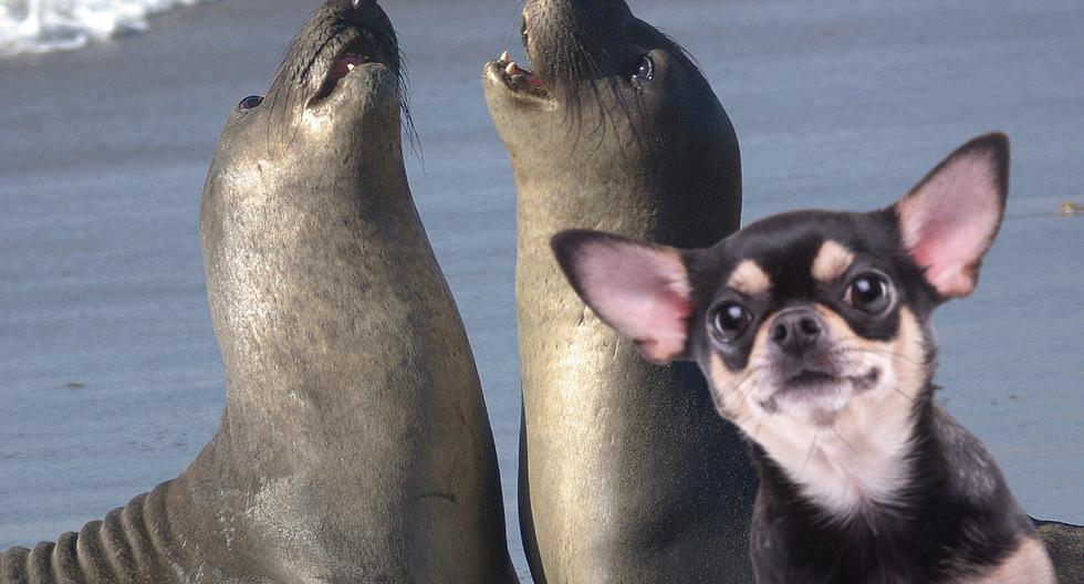 Un video viral protagonizado por un perrito y varios leones marinos se convirtió en lo más visto en redes sociales. (Foto: Pexels/Referencial)