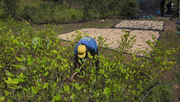 Los productores de café y cacao orgánico buscan ayuda del Estado (Foto: Fidel Carrillo / Cafelab).