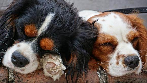 Los canes protagonizaron una singular escena que dio la vuelta al mundo tras aparecer en el portal de YouTube. (Pixabay)