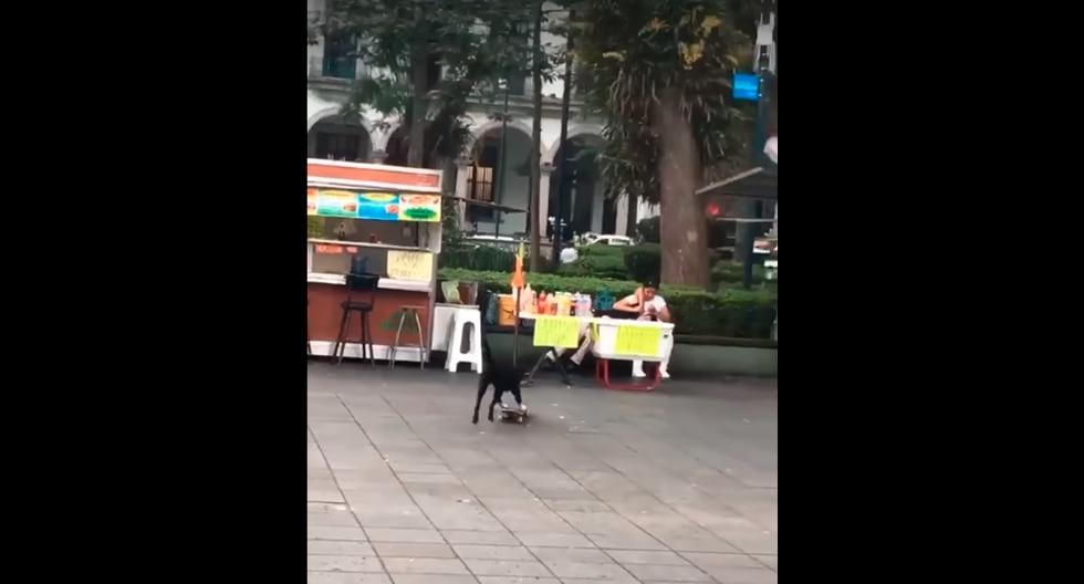 Un perro intentó montar su skate e impensado desenlace causa carcajadas entre miles de usuarios de las redes sociales. (Facebook)