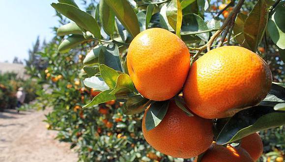 Las mandarinas son uno de los productos que ingresarán a Uruguay. (Foto: GEC)