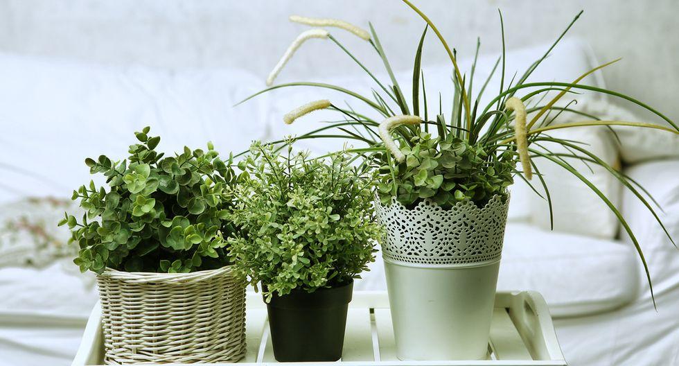 Consejos para escoger las plantas de tu dormitorio - 2