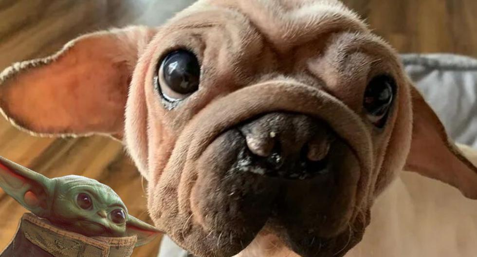 El perrito de enormes ojos tiernos y orejas puntiagudas formaba parte de un cargamento de canes destinados a ser comercializados como carne en China, donde aún es legal venderla. (Foto: morkskywalker en Instagram)