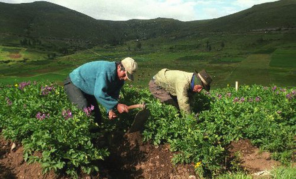 El agro crecería a 4% este año, proyecta el Minagri. (Foto: Difusión)