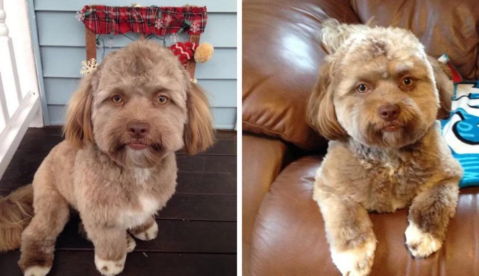 """'Yogi' se hizo famoso en Internet por su rostro """"humano"""" pero la verdad es que no es más que una simple ilusión óptica. (Fotos: Chantal Desjardins en Facebook)"""
