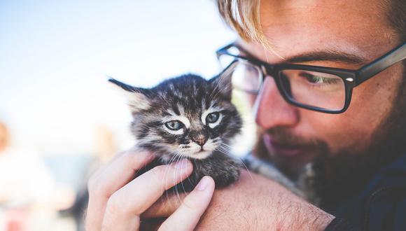 Los gatos pareces ser más susceptibles al contagio de COVID-19. (Foto: Pixabay)