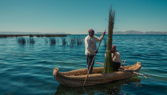 RUTINA DE ALTURA.  Enrique Cuno Canqui, (de pie), representante de la isla Balsero Chimu, recoge totora cada mañana. Es su sustento y un modo de vida ancestral.