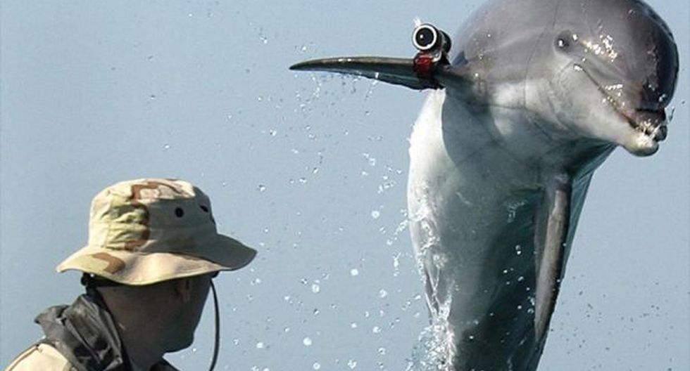 Hamas anuncia que capturó a un delfín que espiaba para Israel