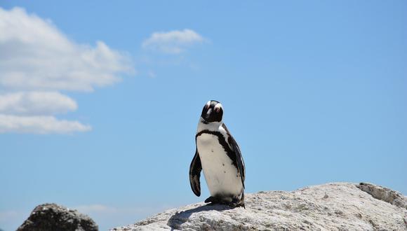 La muerte del pingüino fue reportada por una ONG ambientalista. (Foto: Pixabay)