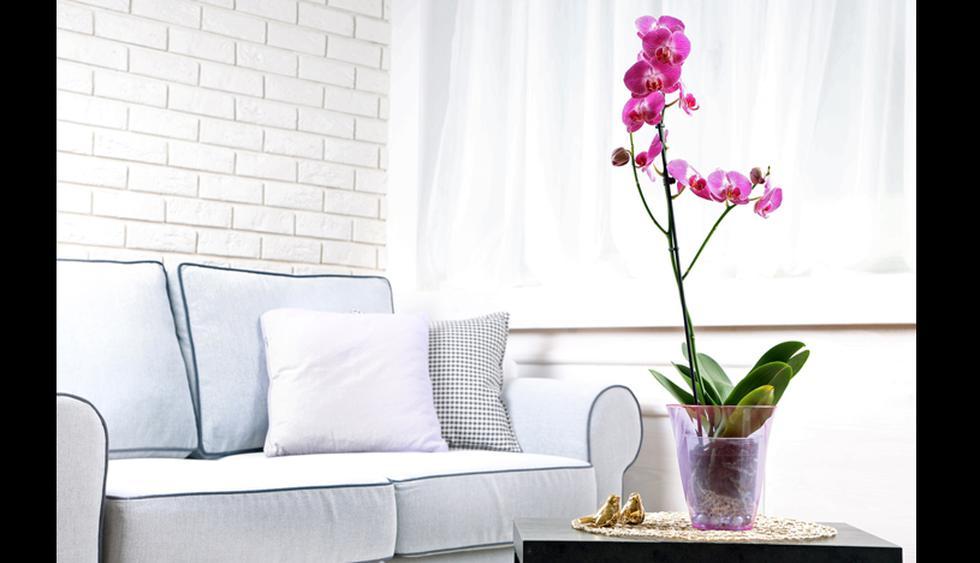 Orquídea. Su agradable fragancia mejora la energía en el hogar y mejora el estado de ánimo. Se recomienda tenerla en el dormitorio, ya que limpiará el aire. (Foto: Shutterstock)