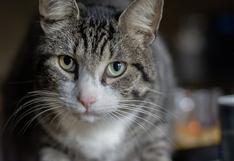 Gato impresiona en redes al comer de una pecualiar manera