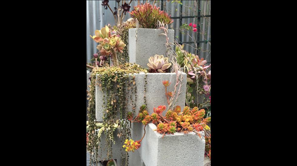 Plantas suculentas: decora con ellas tus espacios abiertos - 3