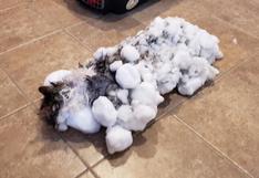 'Fluffy', la gata hallada congelada en el invierno de EE.UU. y que fue devuelta a la vida