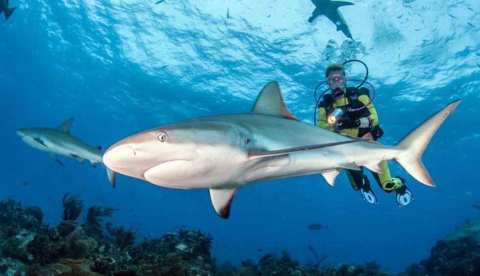 Isla Mala Pascua, Filipinas. Con la intención de mantener con vida a los tiburones zorros, las autoridades de Filipinas han designado a esta isla como un parque marino. Sin embargo, el viajero aún puede nadar al lado de estos ejemplares que pueden ll