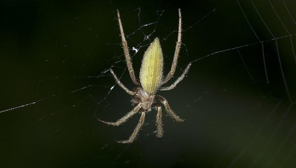 Esta araña no comparte su pareja con nadie más