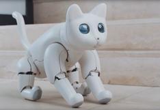 MarsCat, el gato robótico que busca ser la mascota del futuro | VIDEO