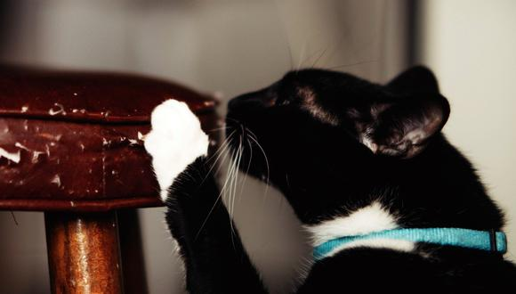 Los gatos rasguñan los muebles por varias razones. (Foto: Pexels)