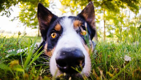 El hábito de comer hierba entre gatos y perros es extremadamente común, dicen los expertos. (T Z|Pexels)