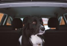 Mascotas: ¿cómo conseguir que nuestros engreídos viajen tranquilos en el auto?