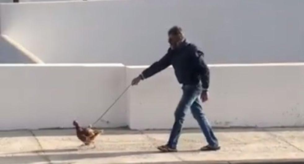El hombre de 51 años le puso una correa a su gallina y la sacó a caminar por el municipio de Uga, en Lanzarote, España (Foto: Captura/ Youtube)
