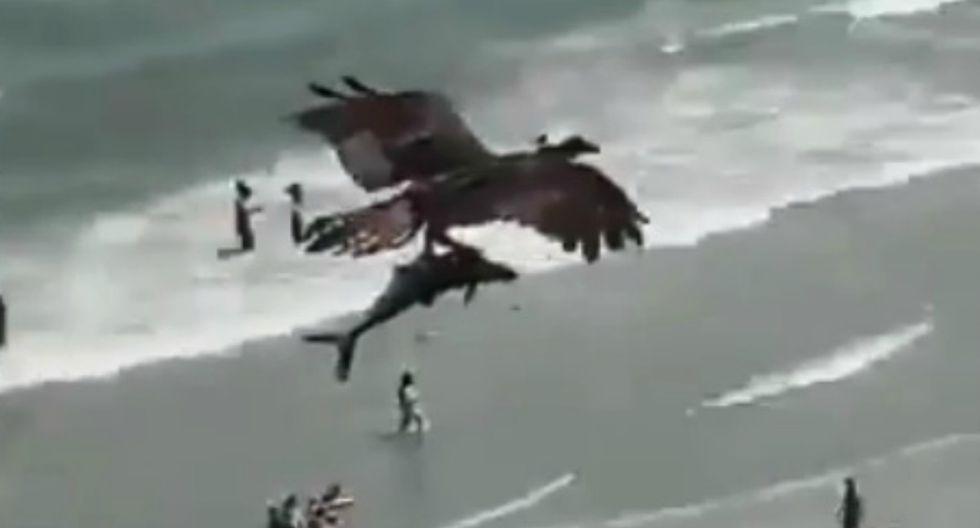 Foto 1 de 3 | Asombro entre los usuarios de redes sociales es lo que viene causando el impactante momento en que un águila captura a un pequeño tiburón y se lo lleva volando. (Foto: Twitter/CRCiencia)