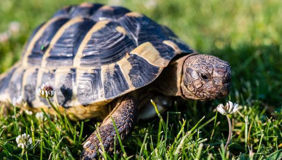 Una tortuga protagonizó un insólito hecho en las autopistas de Estados Unidos al impactar contra el parabrisas de un auto y golpear a una anciana en la cabeza. | Crédito: Pixabay / Pexels / Referencial