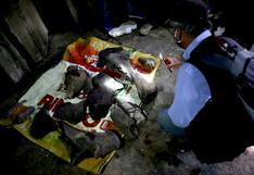 """""""¡Encontramos algo extraordinario!"""": los fósiles de mastodonte extinto hace 10.000 años hallados por mineros en Colombia"""