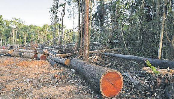 Madera: Cómo revertir la inactividad de concesiones forestales