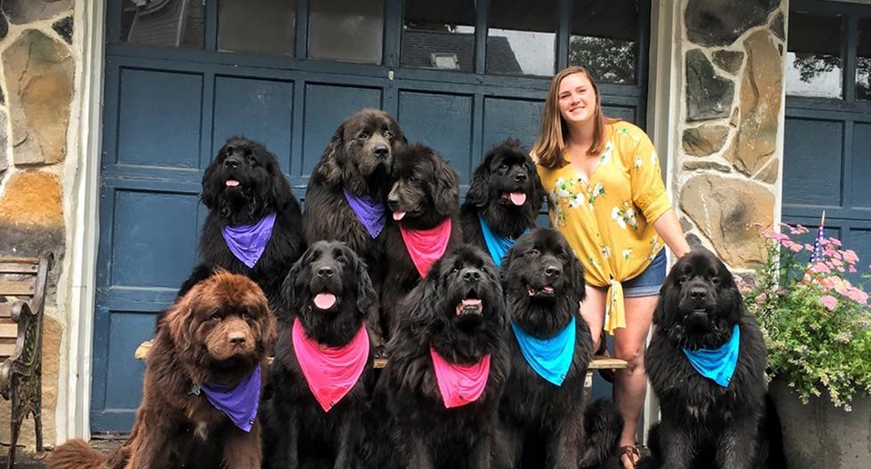 Con sus 9 perros visitan y ayudan a personas hospitalizadas en su tratamiento. (The Newf Crew)