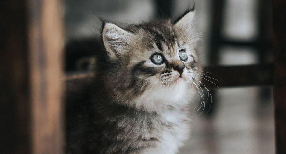 Los gatos son las mascotas preferidas de muchas personas. (Foto referencial: Pixabay)