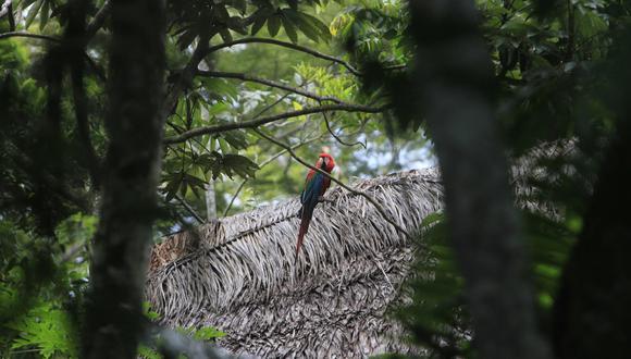Los bosques de Amazonas están contemplados en los proyectos a ejecutar. (Foto: USI)