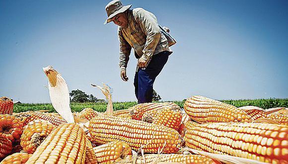 Costos de importación de semillas se podrían elevar hasta 10%