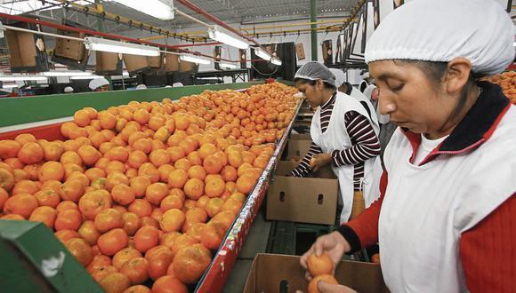 Según Idexcam, las exportaciones de cítricos alcanzaron despachos de 244.783 toneladas valorizadas en US$ 262 millones durante el 2020. (FOTO: GEC)