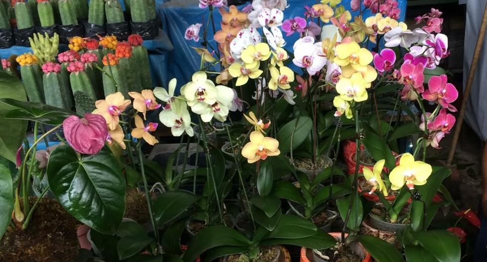 En el mercado mayorista de flores, esta opción de orquídeas (que contiene tres unidades) alcanzan un valor de S/50.